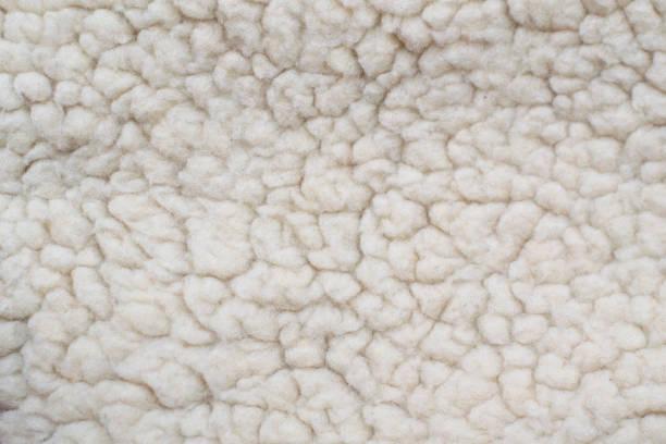 White fleece fur texture. Sheep wool texture. stock photo