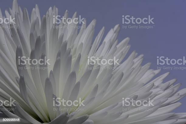Photo of White Flower Background - Background