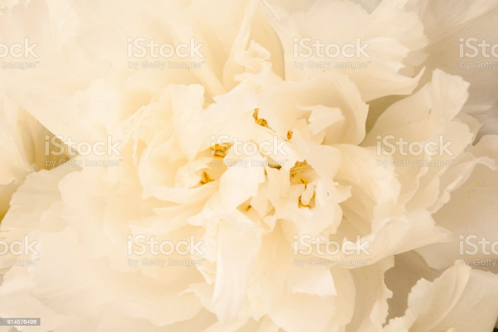 White Flower Background Stock Photo More Pictures Of Backgrounds
