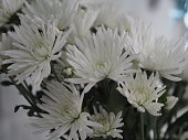white flower beautiful bouquet for background