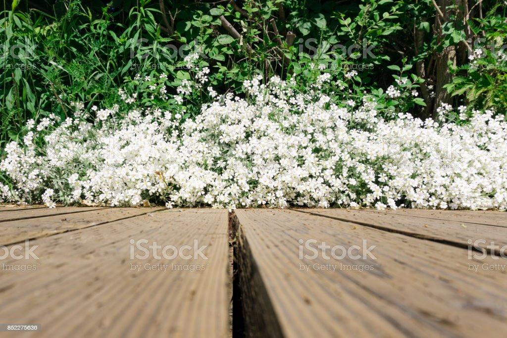 white flower blossom grass wooden plank leading lines stock photo