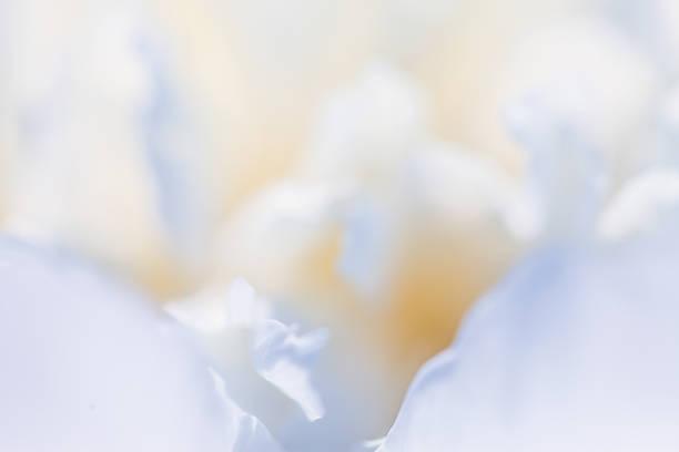 White flower closeup picture id621498596?b=1&k=6&m=621498596&s=612x612&w=0&h=wfyumu55aopy3hojmqa4vmmjhv28jjxe1odfyv3zm 8=