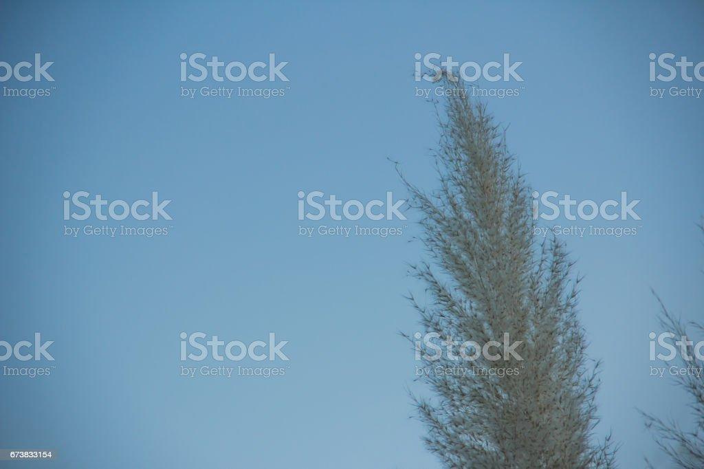 Çimen beyaz çiçek royalty-free stock photo