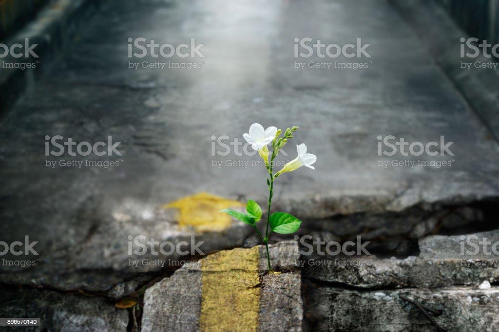 Weiße Blume wächst auf Riss street, Weichzeichner, leere text – Foto