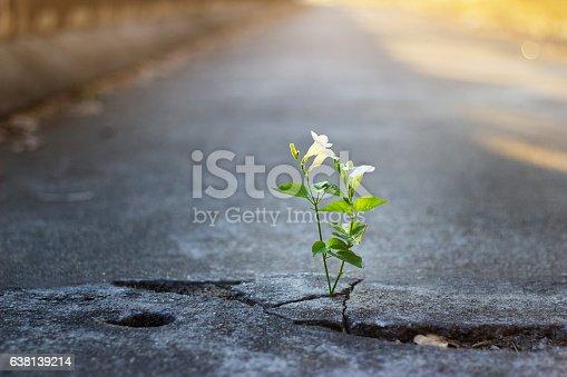 istock white flower growing on crack street, soft focus 638139214