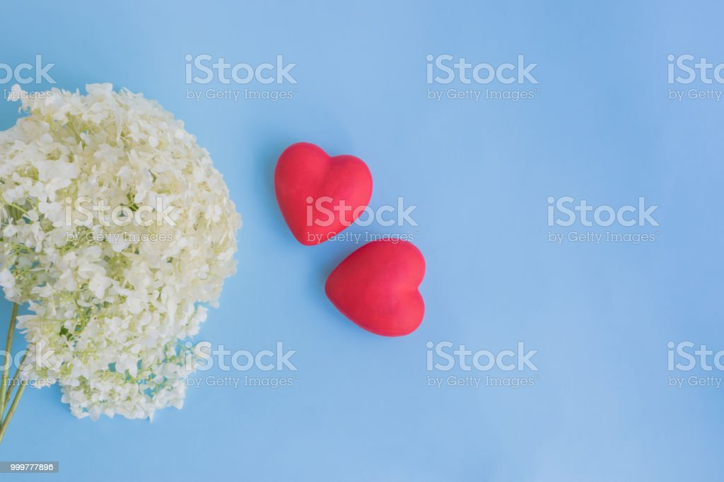 White flower hydrangea on a blue background stock photo