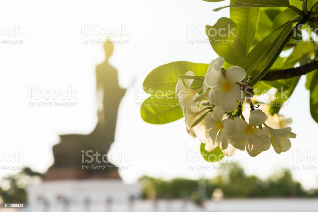 White Flower in Buddhamonthon is place for Buddhist Dharma with blue sky and evening. stock photo
