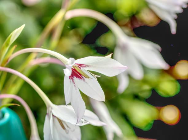 A white flower in full bloom stock photo
