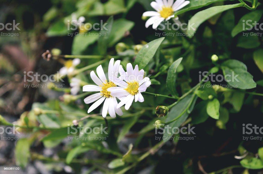 흰색 꽃 가든 - 로열티 프리 0명 스톡 사진
