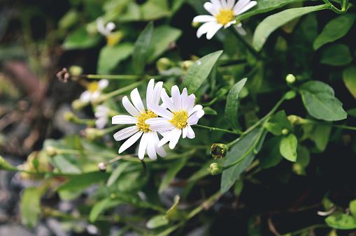 흰색 꽃 가든 0명에 대한 스톡 사진 및 기타 이미지