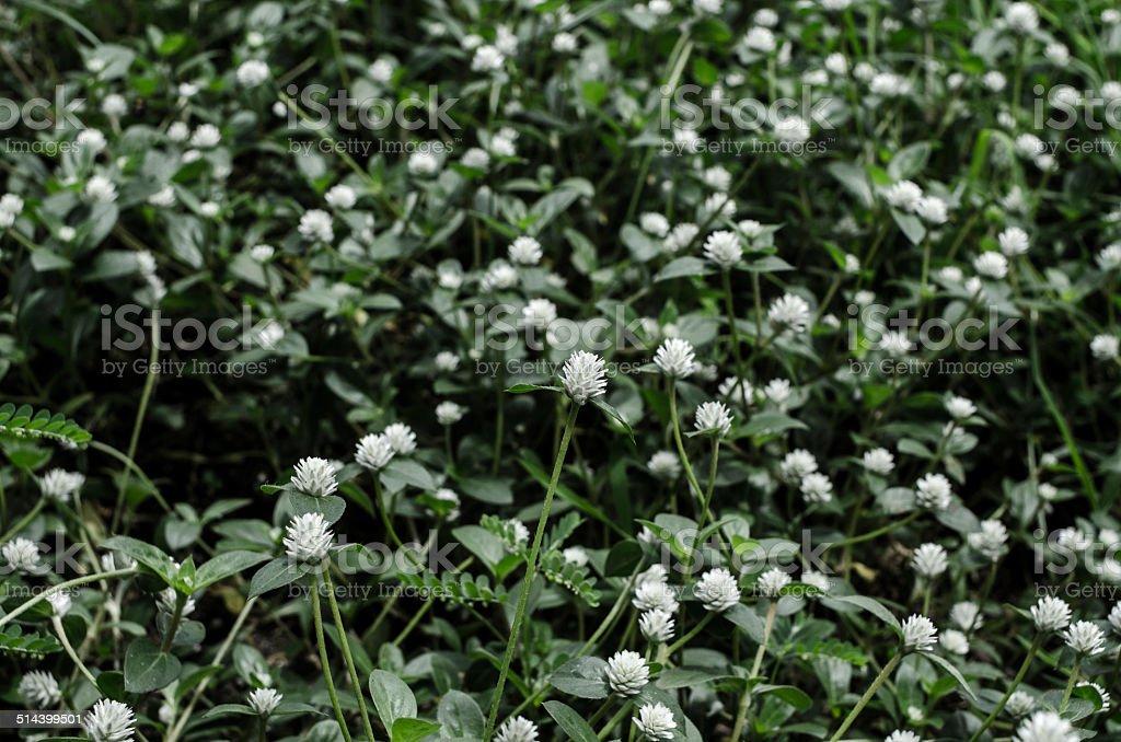 white flower in Grass fields stock photo