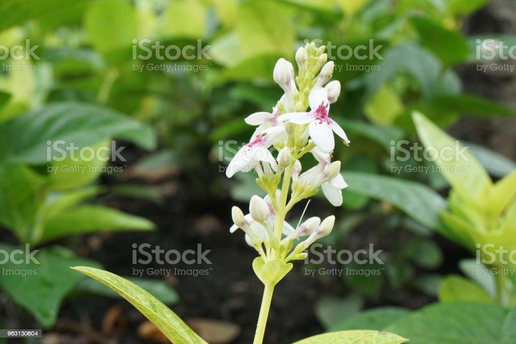 vit blomma i natur trädgård - Royaltyfri Blomkorg - Blomdel Bildbanksbilder