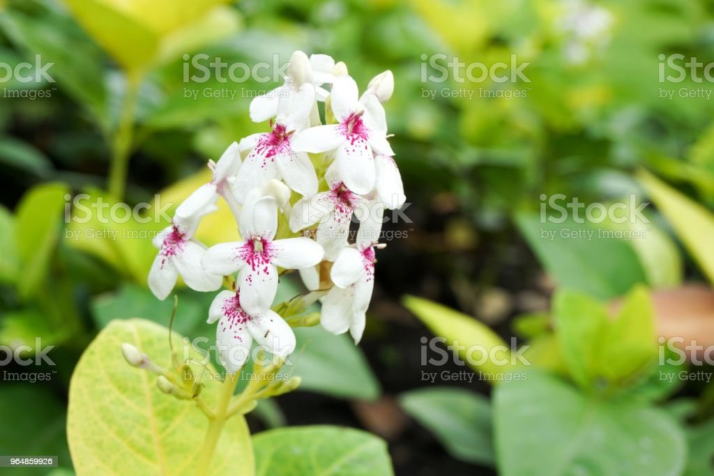 white flower in nature garden royalty-free stock photo