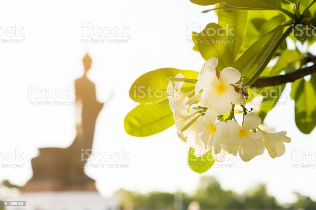 White Flower in Phutthamonthon is place for Buddhist Dharma with blue sky and evening in Nakon Pathom Thailand. stock photo