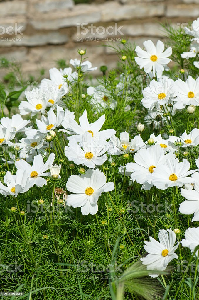 White Flower On A Bed With Other Plants Closeup Stock Photo More