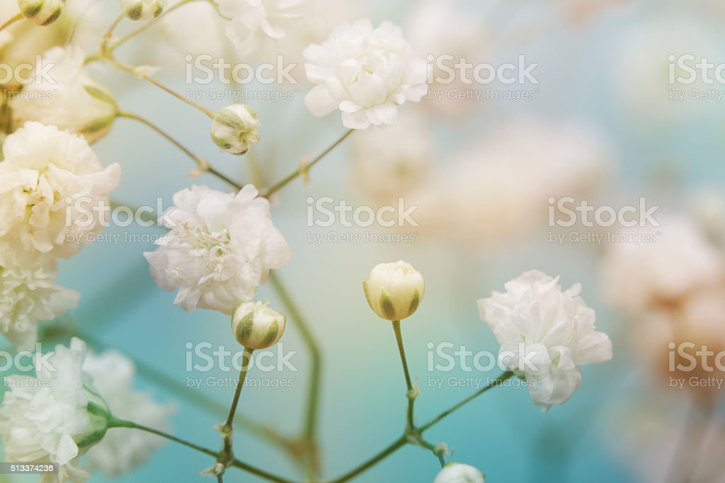 White flower on blue background. Soft focus. stock photo