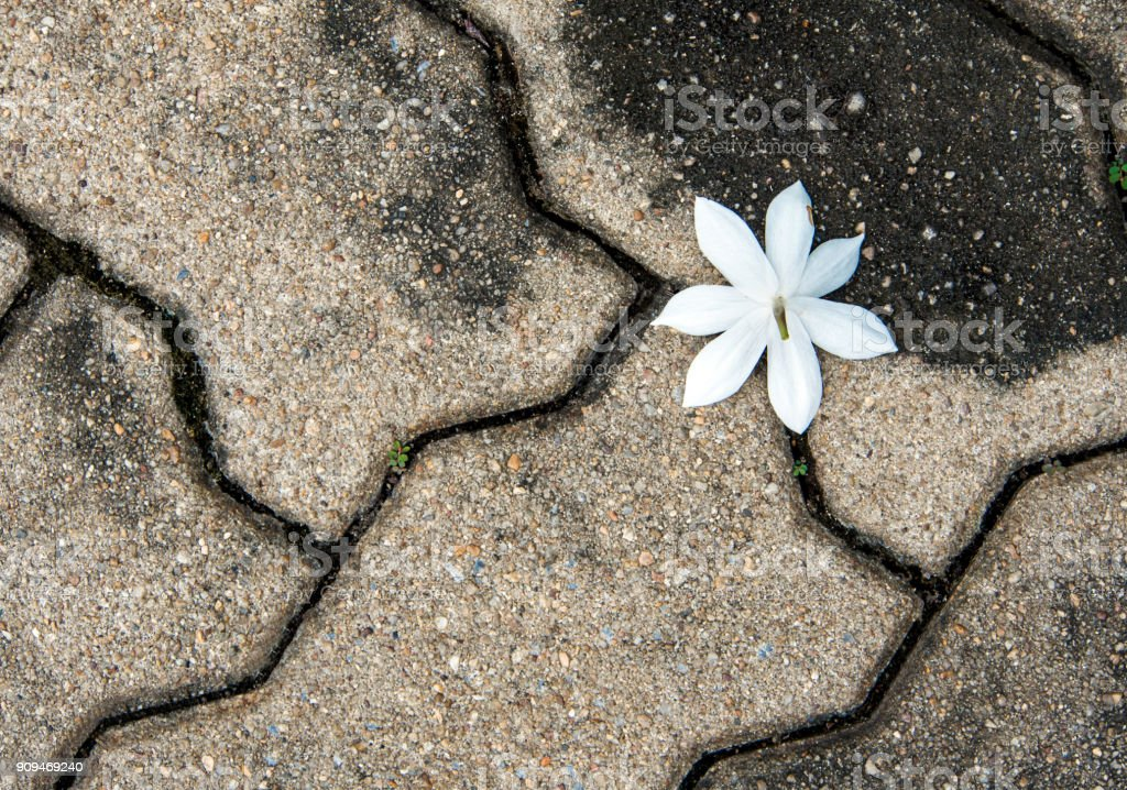 White flower on surface of outdoor heavy tiles flooring stock photo