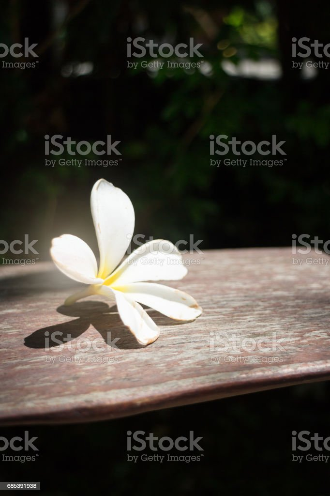 White Flower On Wooden Bench foto de stock royalty-free