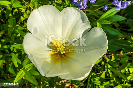 A close up of white flower