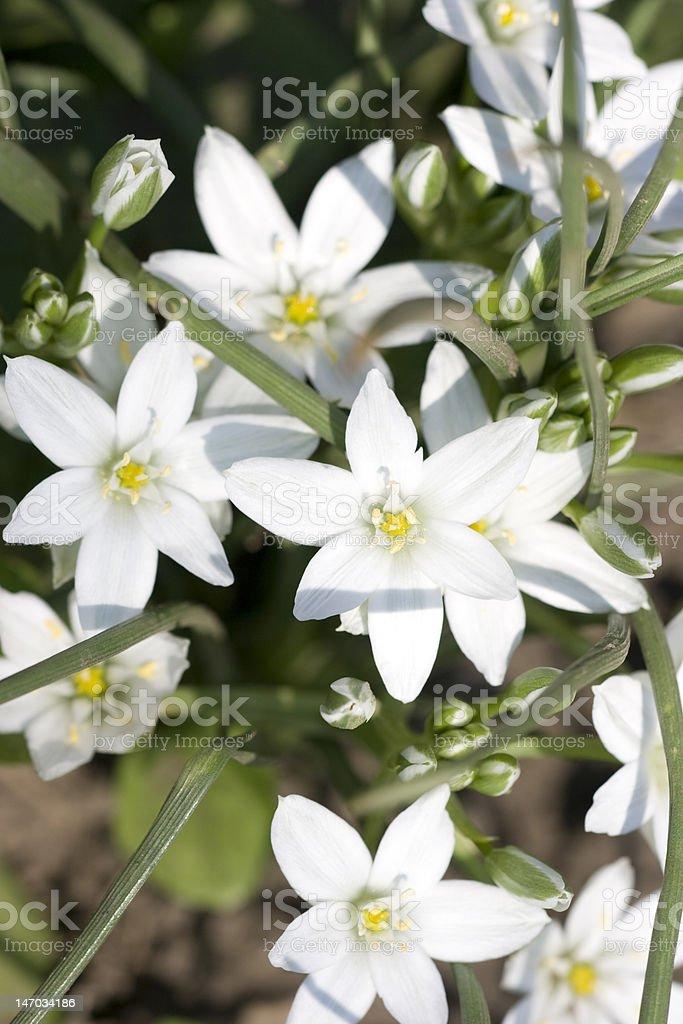 White flower stock photo