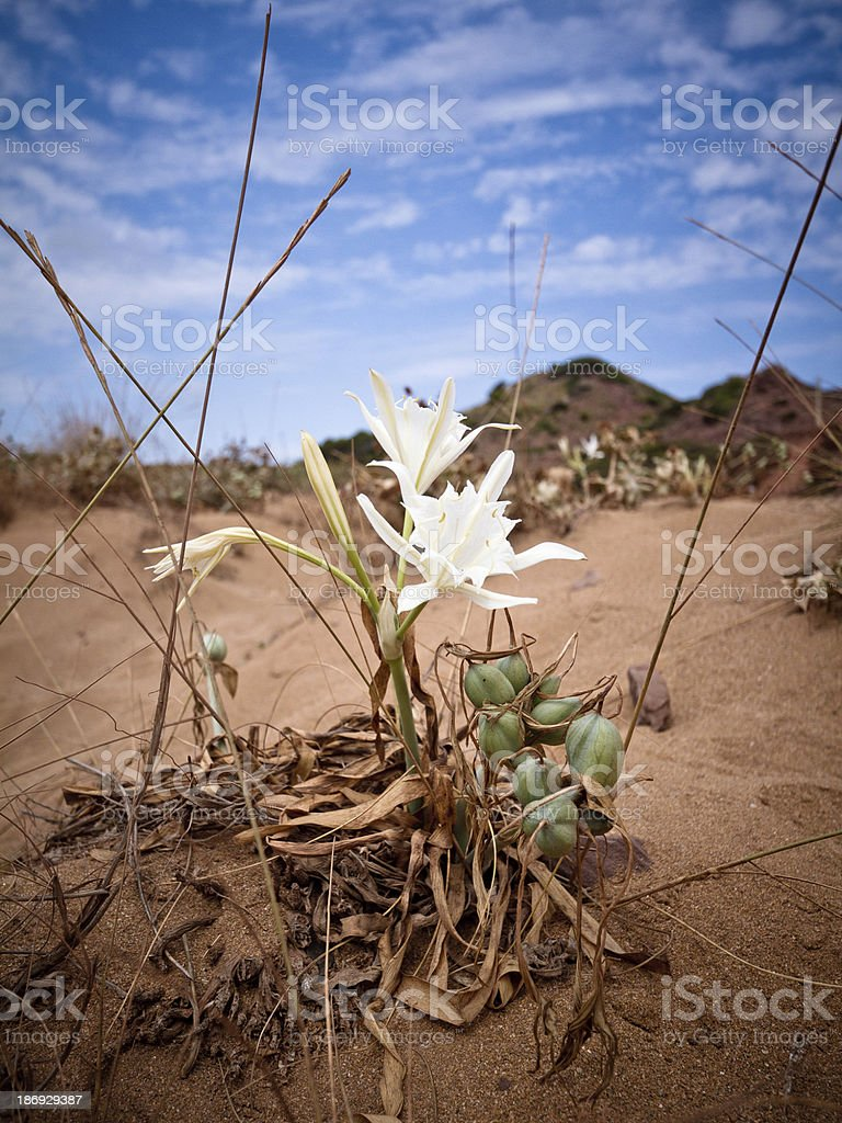 Bianco a fiori - foto stock