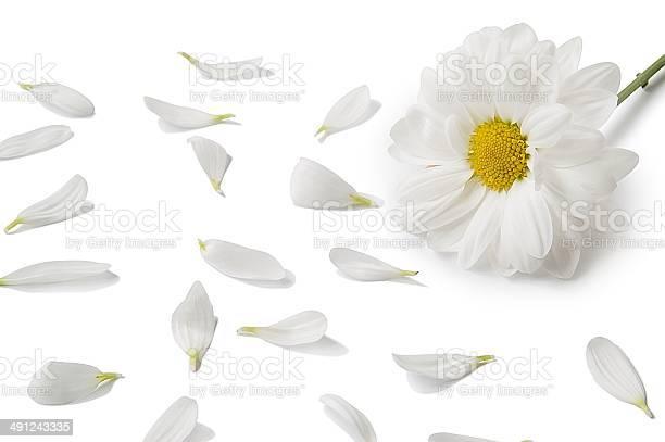 White flower picture id491243335?b=1&k=6&m=491243335&s=612x612&h=kcgzklmdf0z4mfuhzmvhsfyyseffz0ztnpc5wts1l68=