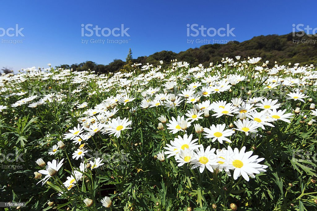 White flower plant royalty-free stock photo