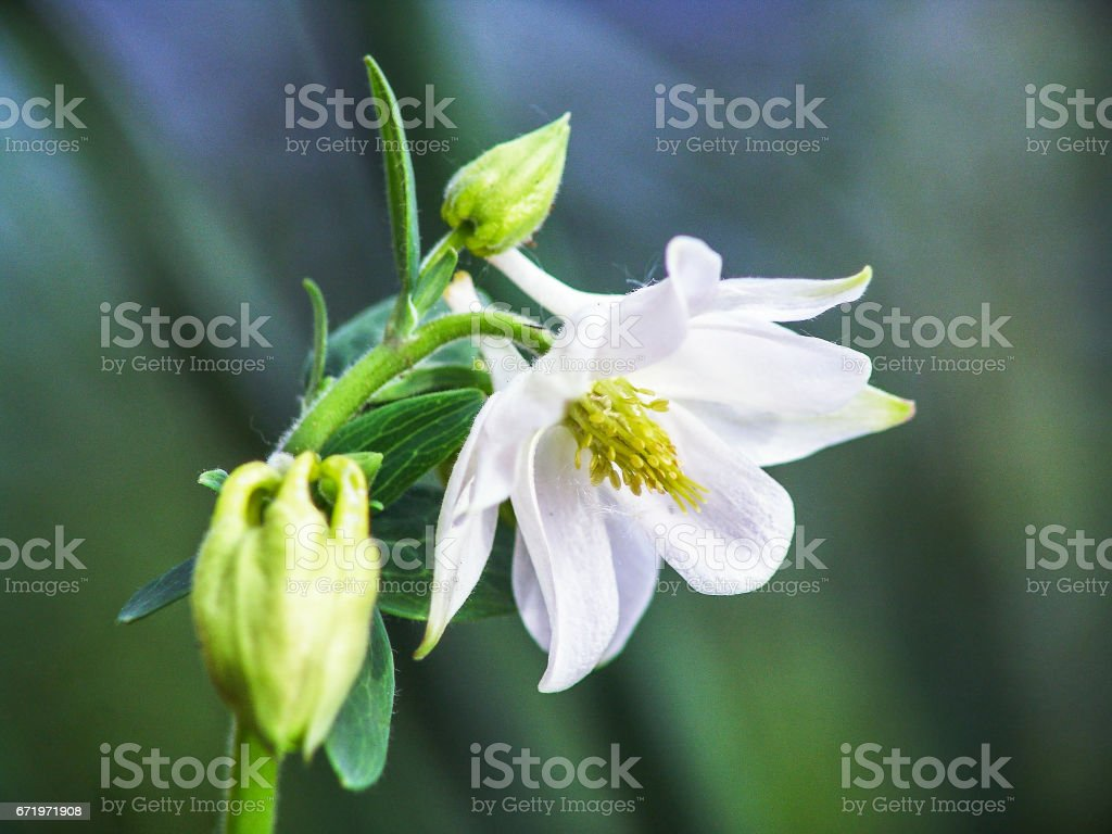White Flower With Yellow Stamens Stock Photo More Pictures Of