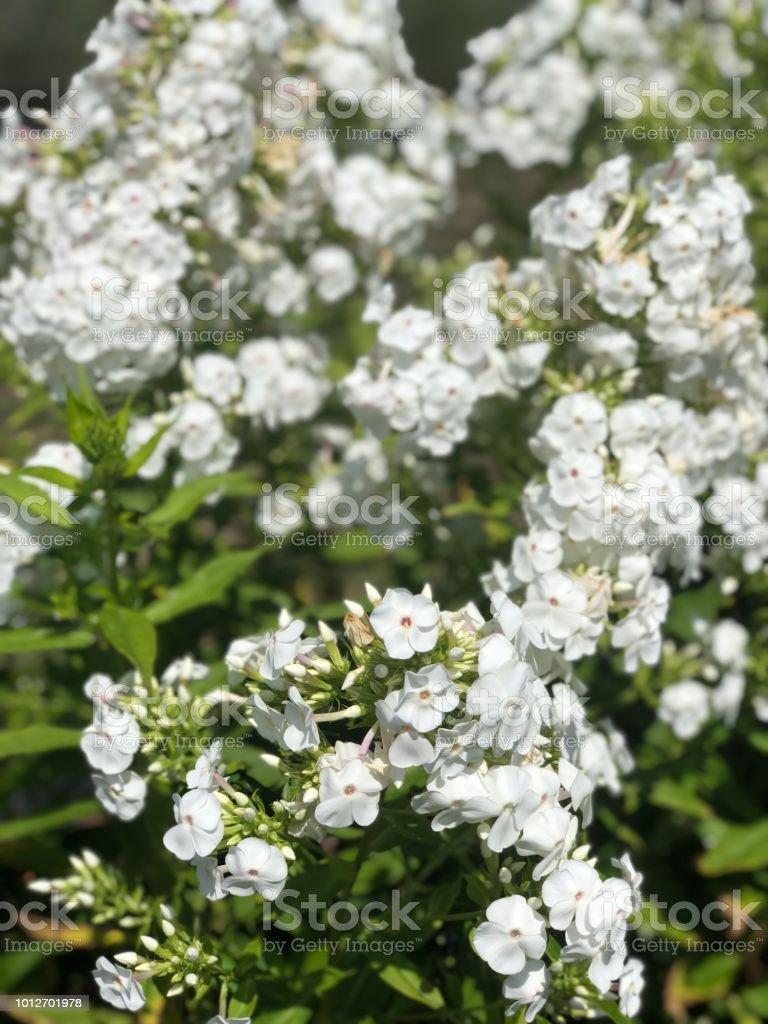 White flowered plant stock photo