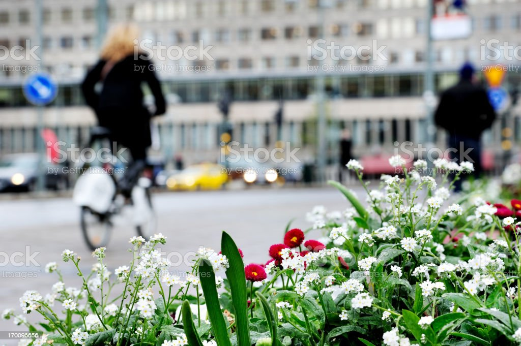 White flowers against city environment, blurred bicyclist and pedestrians royalty-free stock photo
