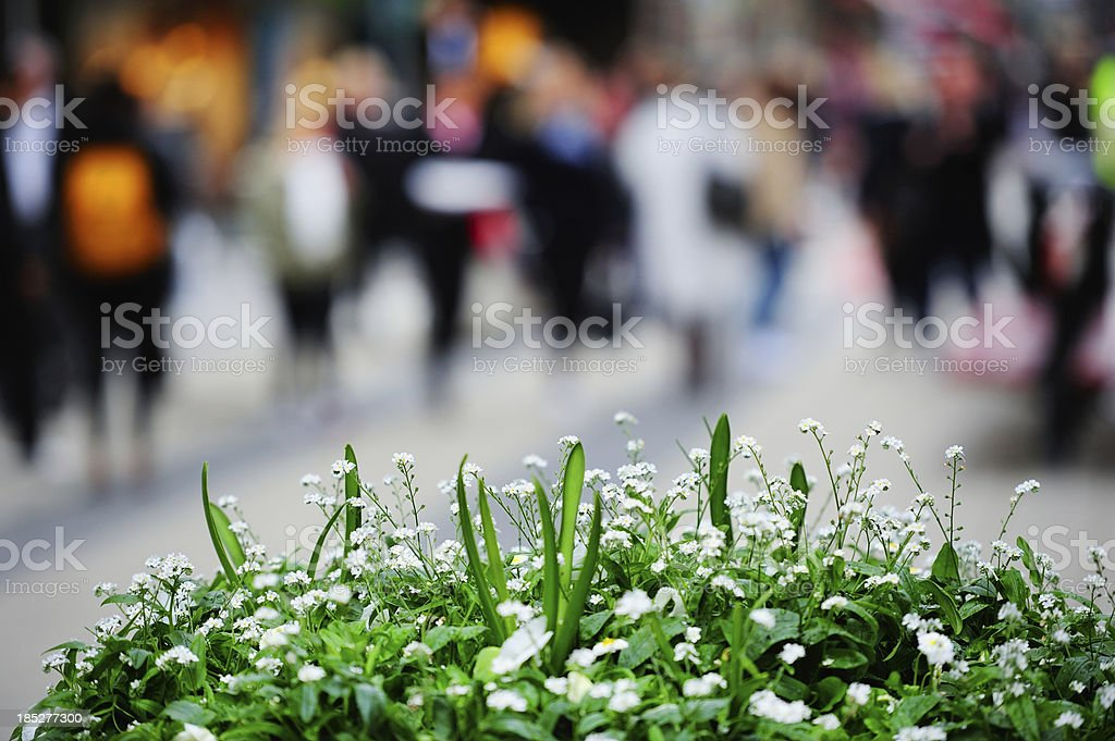 White flowers against city environment, blurred pedestrians royalty-free stock photo
