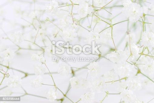 652288118istockphoto White flowers background (gypsophila paniculata), blurred 825398444