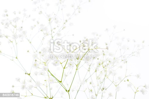 652288118istockphoto White flowers background (gypsophila paniculata), blurred 840918746