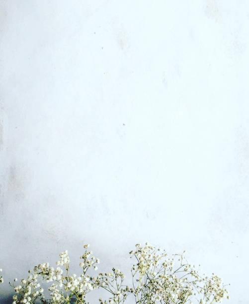 vita blommor bakgrund - flower bouquet blue and white bildbanksfoton och bilder
