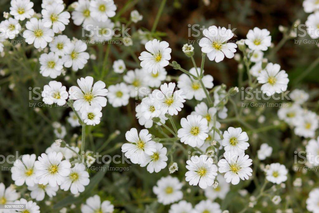 Weiße Blumen Blumenmuster Leer Für Den Designer Botanischer Garten ...