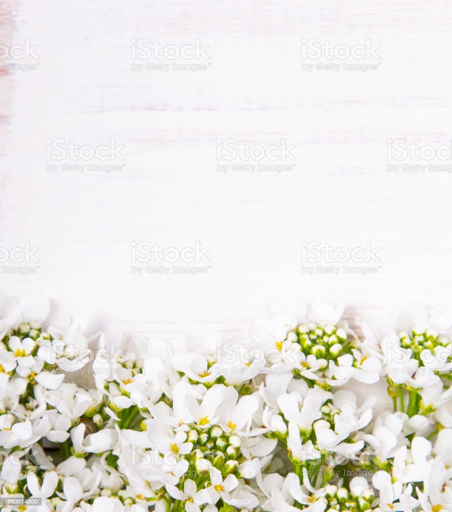 White Flowers Frame On White Wooden Background Stock Photo Istock