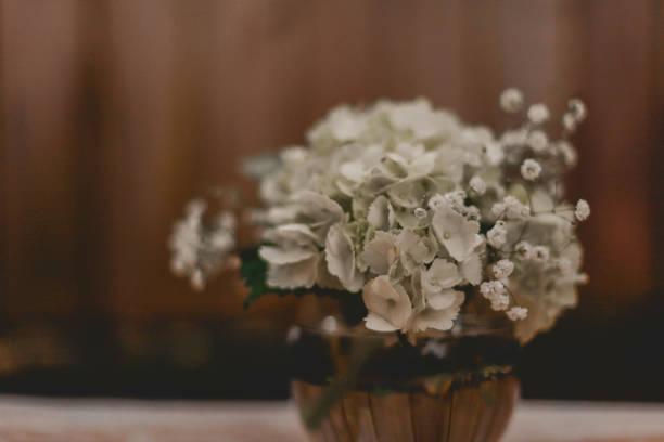Weiße Blüten im Topf – Foto