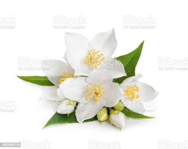White flowers of jasmine on white isolated background picture id862596276?b=1&k=6&m=862596276&s=612x612&h=bor88arfrjhopk9lcf7 nguhs1mwwsmmjoudewzzmji=