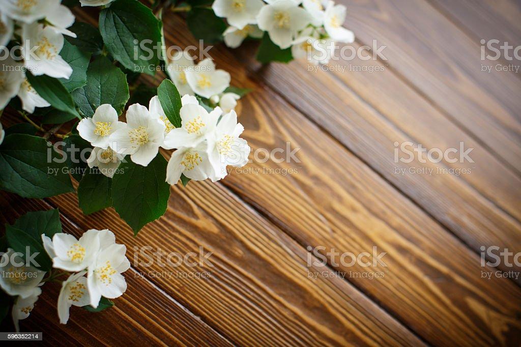 Weißen Blüten von Jasmin Lizenzfreies stock-foto
