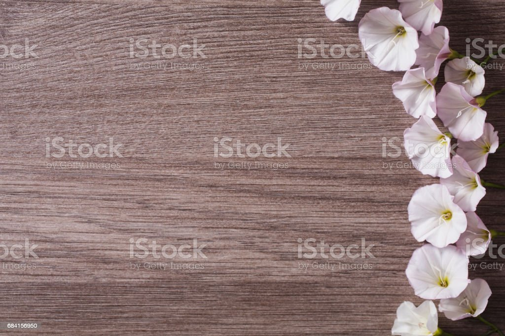 White flowers on a wooden background. Place for printing for text, for design. Flat lay zbiór zdjęć royalty-free