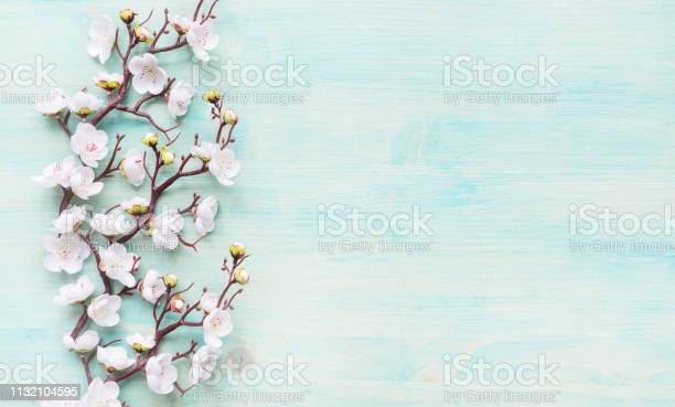 White flowers on blue wooden background picture id1132104595?b=1&k=6&m=1132104595&s=612x612&h=iw3qvobo 4r2ze8fysfsbviqxbs4nczjjtlnszz4 pa=
