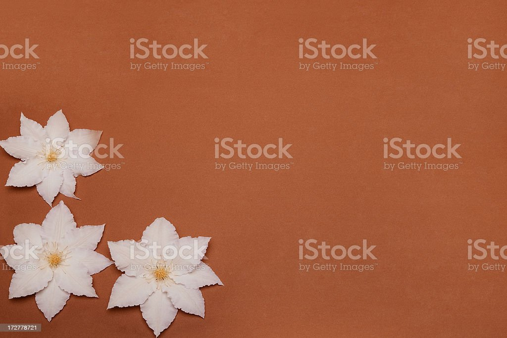 White flowers on brown construction paper stock photo