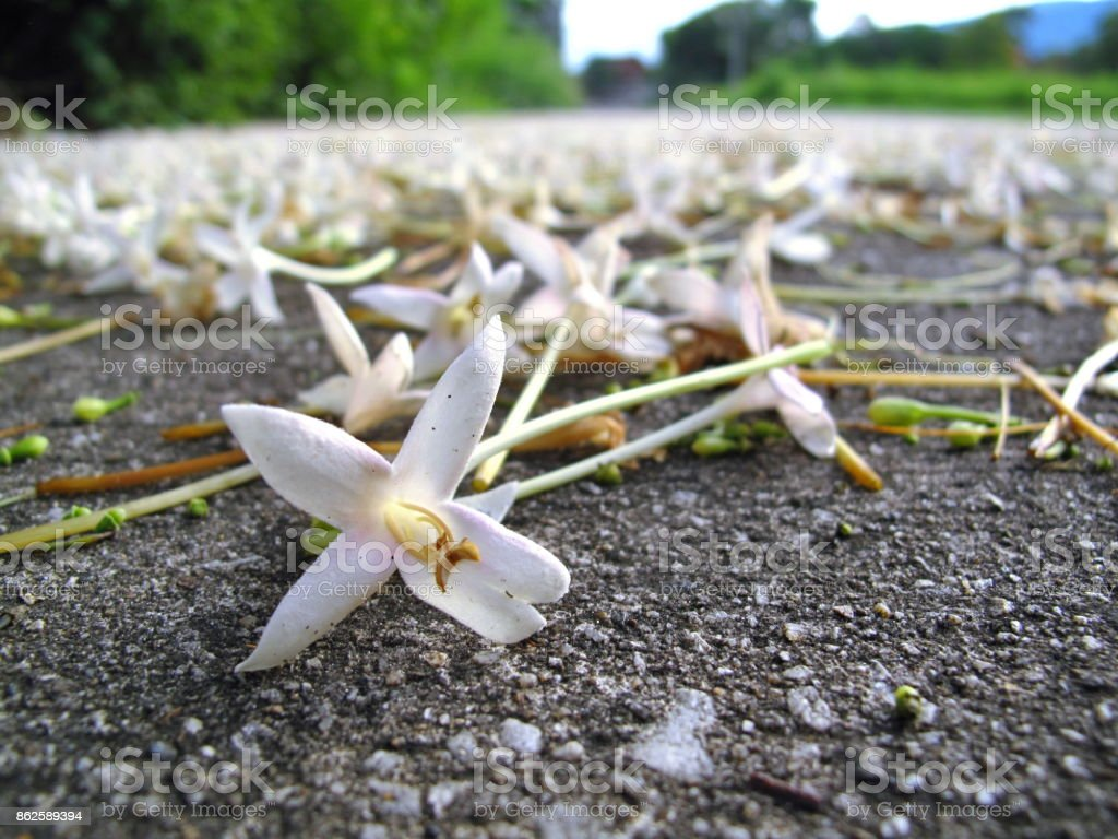 White flowers on cement floor stock photo