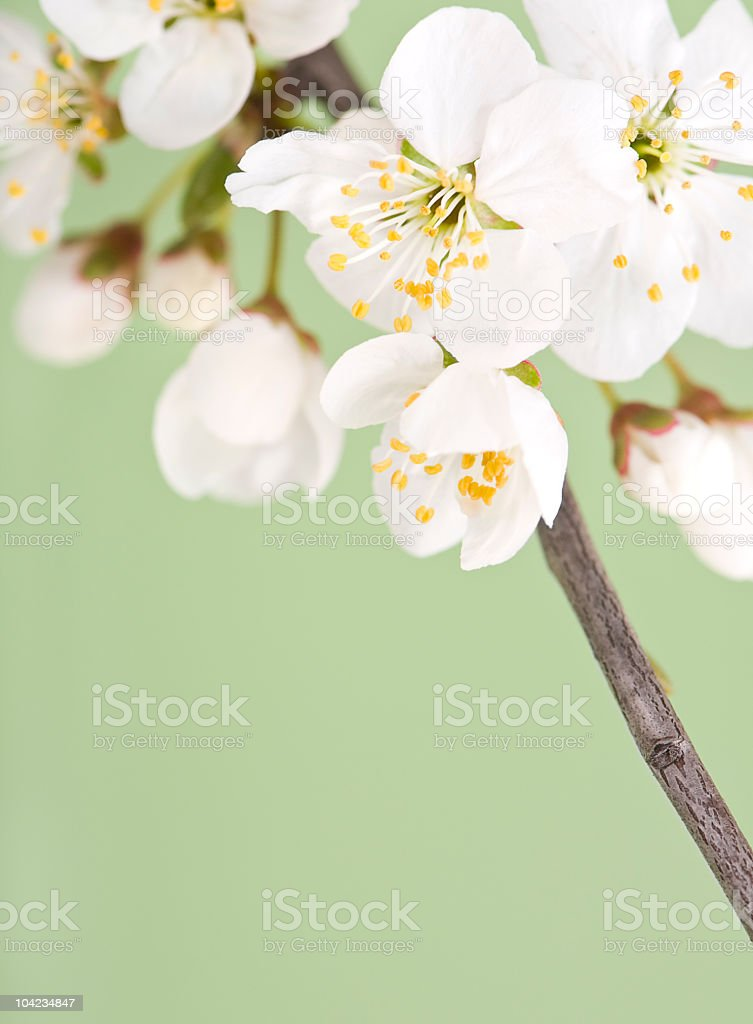 White flowers on green background royalty-free stock photo