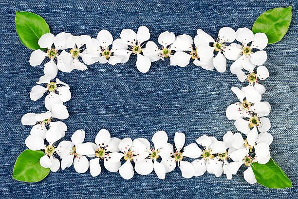 weiße blumen auf jeans - pflaumen jeans stock-fotos und bilder