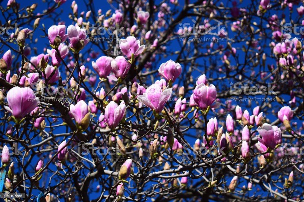 Weiße Blumen Auf Dem Baum Sagen über Den Kommenden Frühling