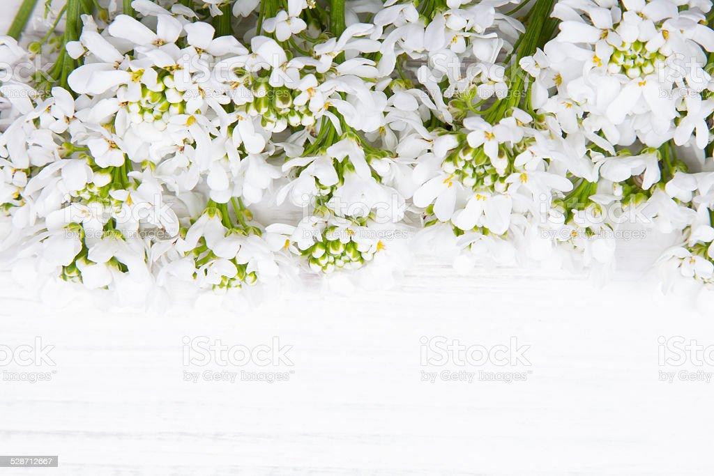Weiße Blumen Auf Weißem Holzhintergrund Stock-Fotografie und mehr ...