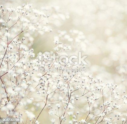 istock White flowers 908730798
