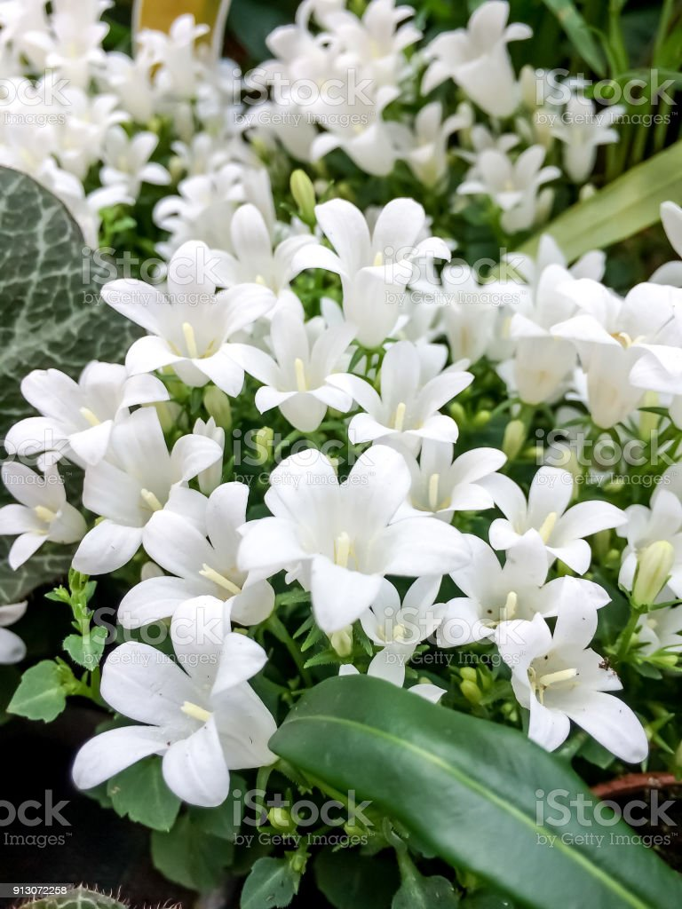 White Flowers Stock Photo More Pictures Of Beauty In Nature Istock