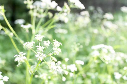 Witte Bloemen Stockfoto en meer beelden van Blad